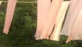 絹のショールを2つの植物で染める